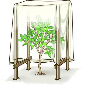 HOW TO;Protect plants from frost    DIY AND TIPS--See how to shelter tender plants with a cardboard box, staked frost cover -- or even a patio chair.