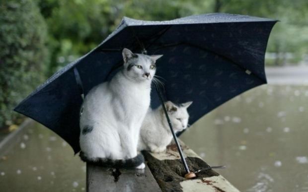 Гисметео Украина: погода на 27 июня – по всей стране грозы https://joinfo.ua/weather/1208793_Gismeteo-Ukraina-pogoda-27-iyunya--vsey-strane.html