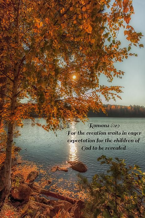 Romans 8:19 For the creation waits in eager expectation for the children of God to be revealed