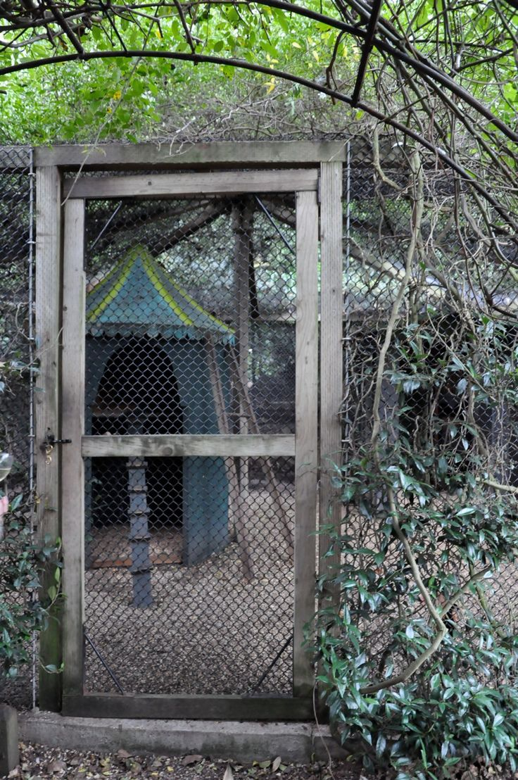 100 best chicken architects images on pinterest chicken houses