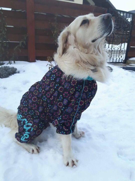 Aris, frumos si elegant in Salopeta de Ploaie de la King Maru --> https://kingmaru.ro/  #hainecaini #accesoriicaini #imbracamintecaini #caine #caini #catel #catei #dog #dogs #kingmaru