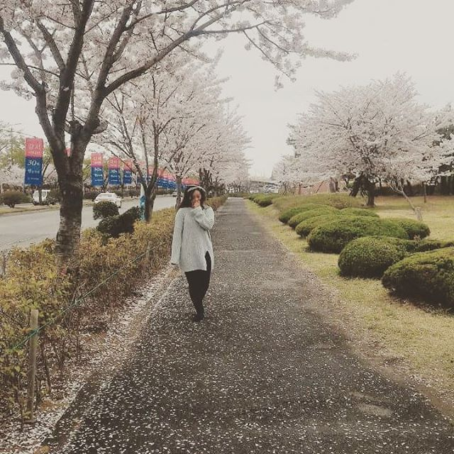 【gadisransel】さんのInstagramをピンしています。 《Seseruan liburan ke Korea Selatan yuk! Menikmati indahnya bunga sakura saat spring, pasti asyik! Foto-foto cantik, belanja, mengunjungi situs sejarah dan menjelajah Seoul ala orang lokal. Tunggu apalagi? Join trip bareng sama @gadisransel ya pastinya^^ Cuma KRW 650.000 tanggal 3-7 April 2017 #trip #tripmurah #backpacking #backpack #seoul #korsel #korea #tripstagram #gadisransel #liburanmurah #sakura #springtour #cherryblossoms #maret2017》