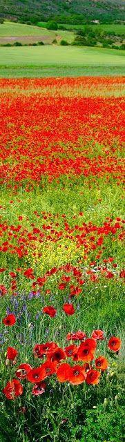 Red spring landscape, Spain.