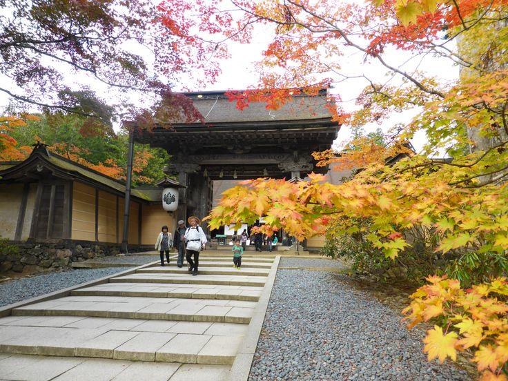 Ekoin temple stay, Koyasan