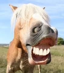 SMILING HORSE - Google Search