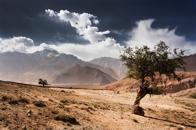 Nepal - Lone trees | Flickr - Photo Sharing!