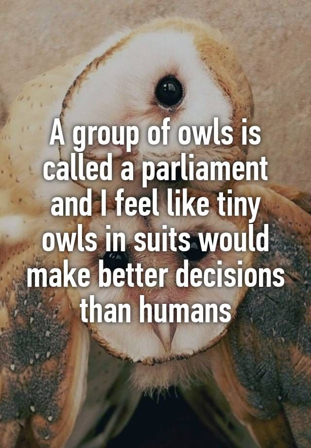 A group of owls is called a parliament and I feel like tiny owls in suits would make better decisions than humans