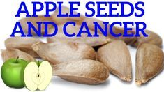 Apple Seeds and Cancer What the Government Has Been Hiding From You for Years - ✅WATCH VIDEO http://alternativecancer.solutions/apple-seeds-and-cancer-what-the-government-has-been-hiding-from-you-for-years/ 	 Apple Seeds and Cancer What the government has been hiding from you for a long time. The lack of importance of apple seeds, cherry seeds, apricot seeds or severe almonds tends to cause almost frozen attacks or furious responses in a few. Why? Cyanide is in them