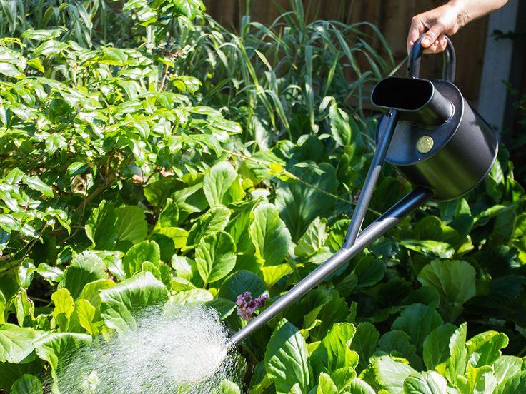 Profesjonalna, idealnie zbalansowana konewka z długą szyjką daje pełną kontrolę nad strumieniem wody, pozwala dotrzeć do tylnych części kwietników i gęstszych roślin. Na końcu szyjki znajduje się zdejmowane mosiężne sitko, tworzące delikatny strumień.