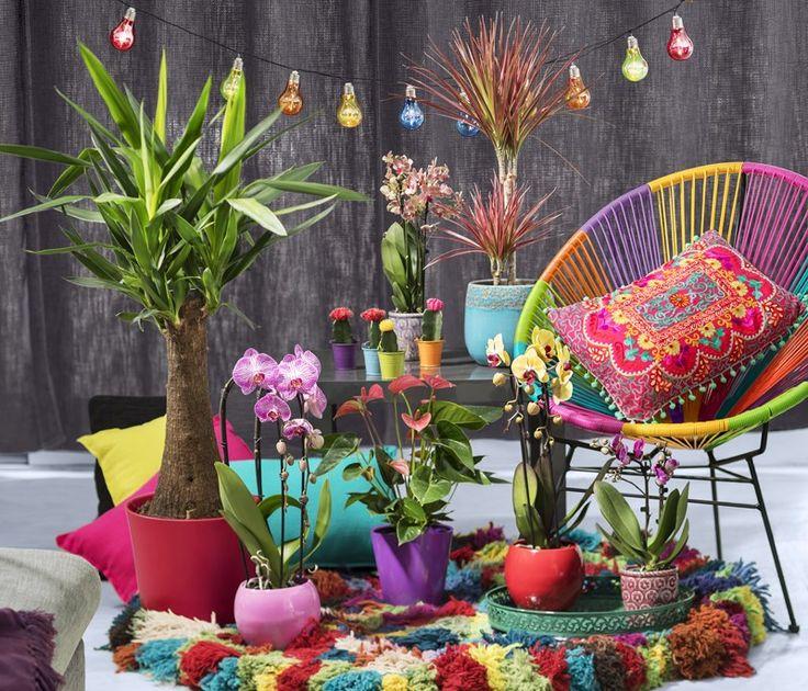 Ronan kerlock pour une déco toute en couleurs tendance plantes vertes
