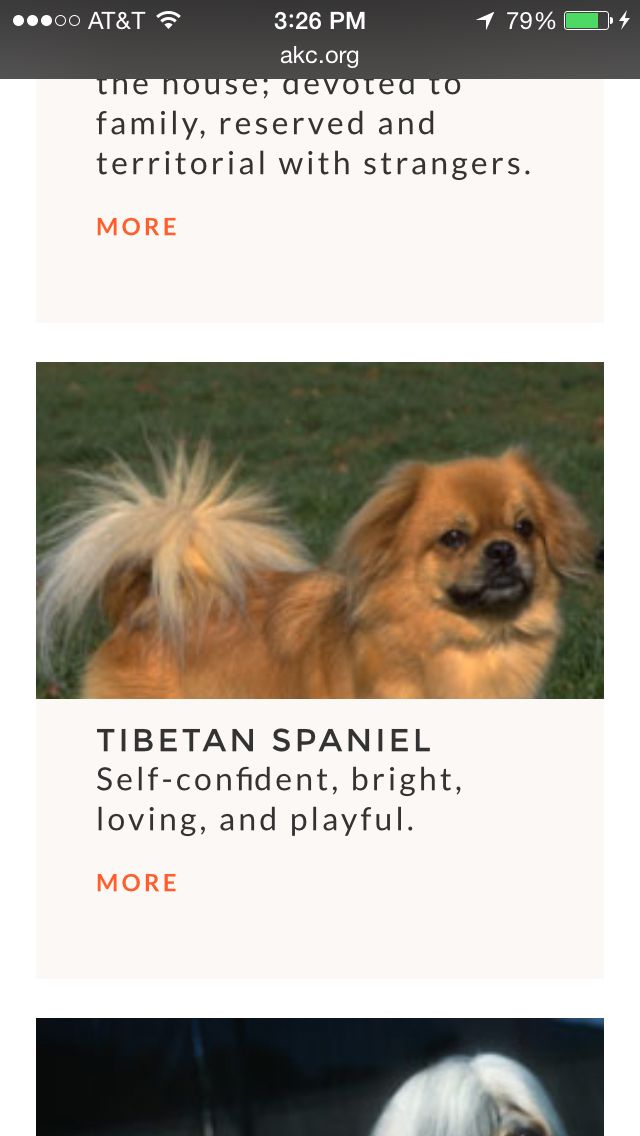 8 best japanese chin images on pinterest japanese chin dog breeds p solutioingenieria Images