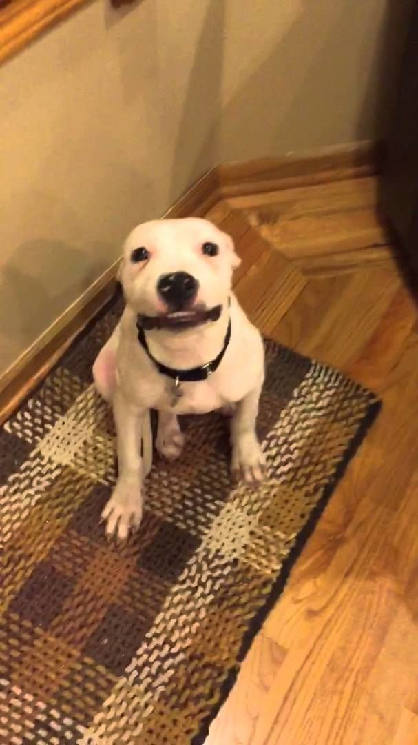 Herbert The Rescue Puppy Can Smile On Command And It's Hilariously Cute.