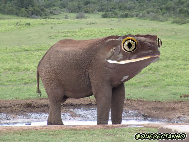 Froglephant. | 21 Cute But Vaguely Unsettling Animal Mashups