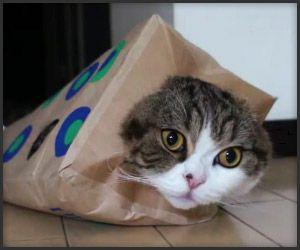 Maru proves that cats can be fashionable too: Maru Prove, Cat Superstar, Cat Cat, Cat Felt