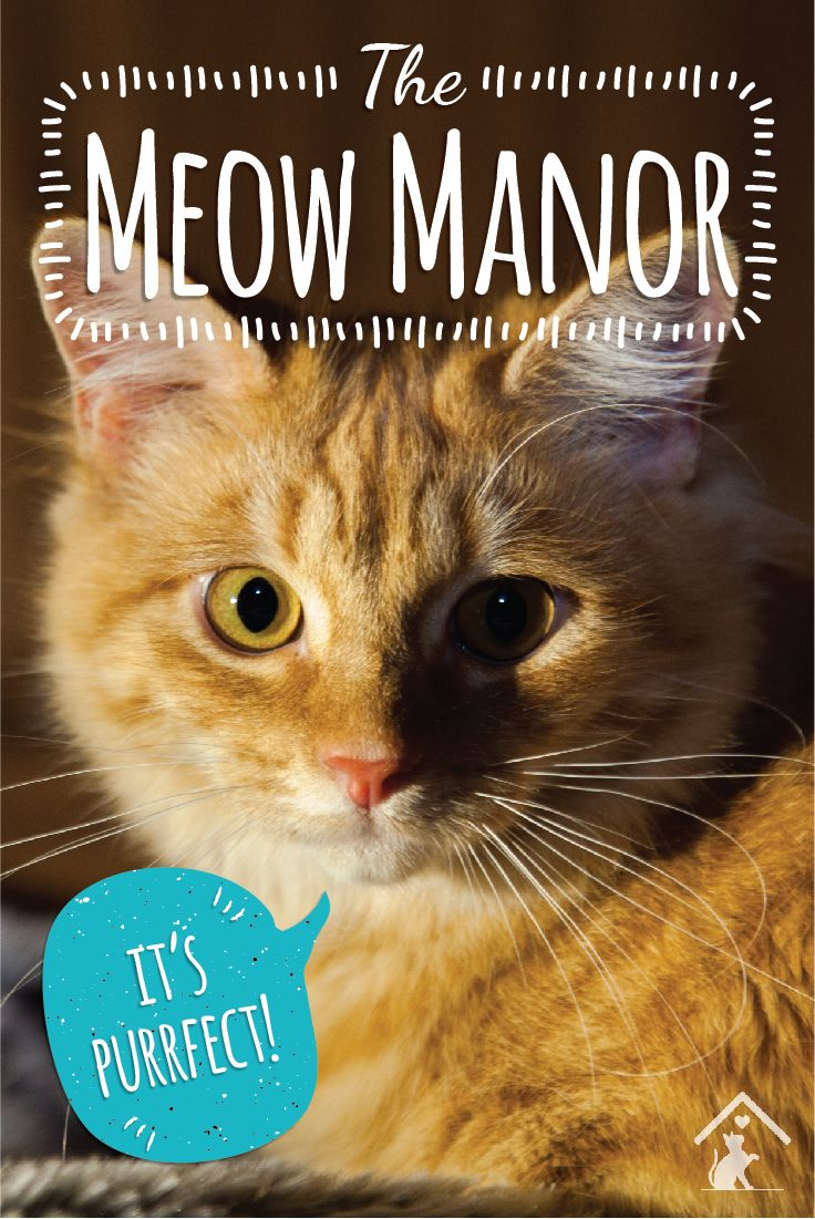 Give your furry friends the freedom they deserve with the Meow Manor enclosure! It's spacious and secure, so your kitty can play safely all day long! Click the image to find out more. #meowmanor #outdoorcatenclosures #backyardcatenclosures