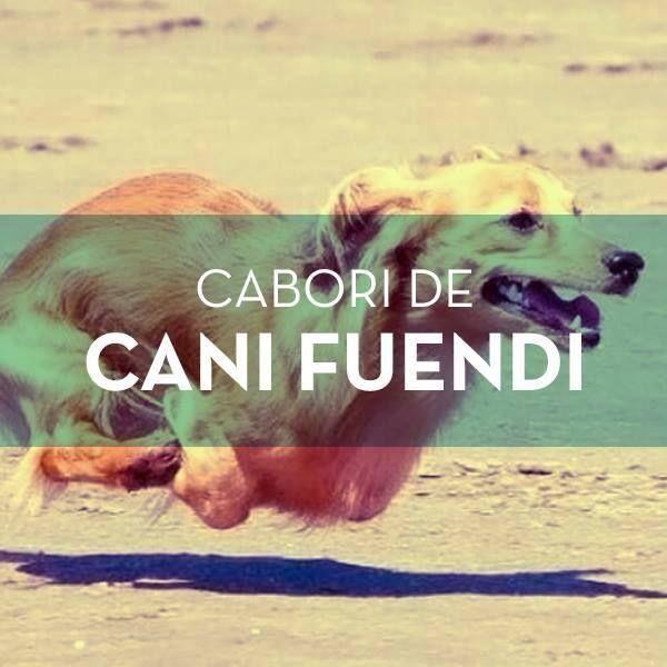 Cabori de cani fuendi ! quando non si riesce a denominare un colore si suole dire :il colore di un cane che scappa.