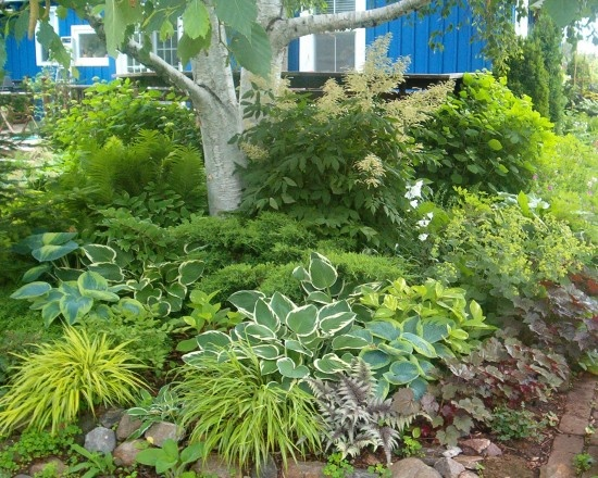 Hostas, goat's beard, coral bells, ferns, forest grass ...