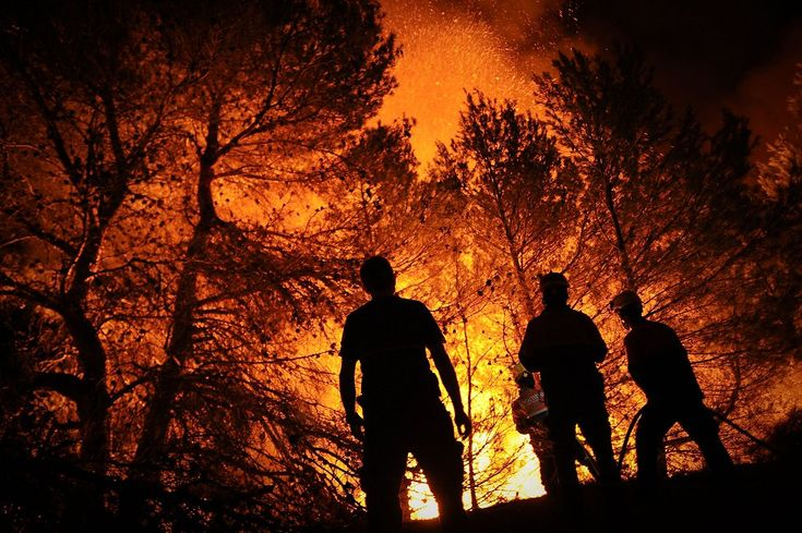 Forest Fires!