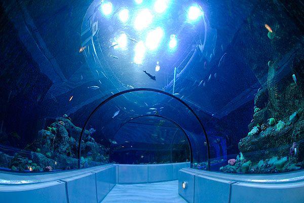 L'aquarium de Quebec