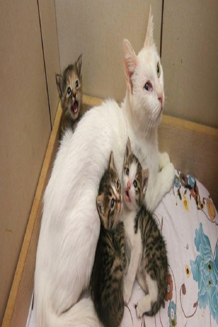 pet ferret losing a dog dog cat pet supplies pet animals