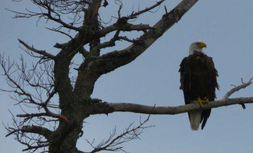 eagle moose lake manitoba
