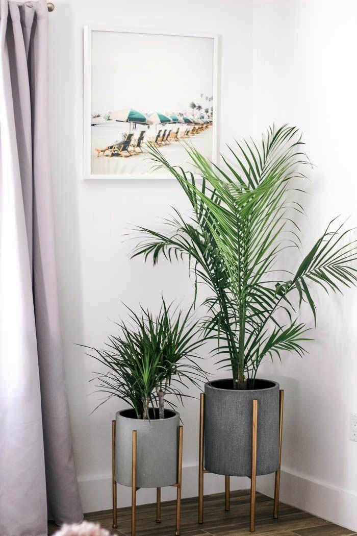 22 Trendy Modern Residing Areas Zeltahome Com Living Room Plants House Plants Decor Living Decor