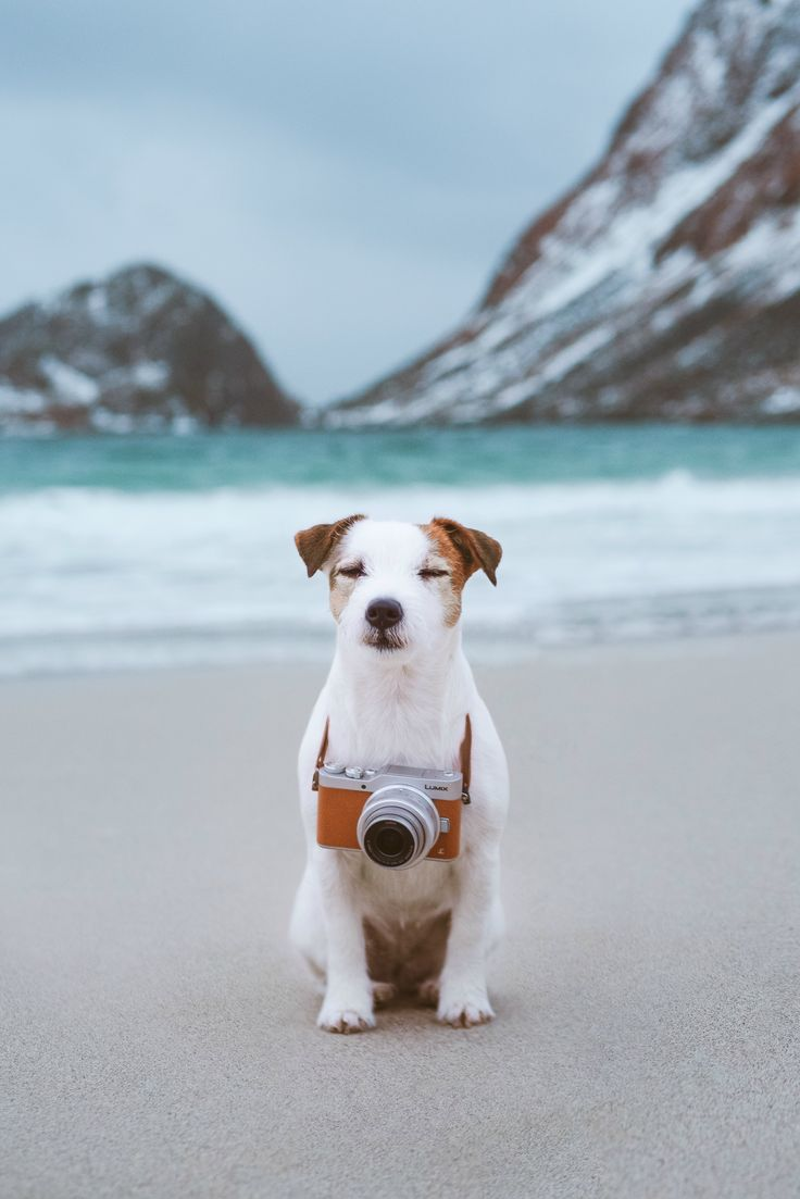 Cutest jack russel terrier by the sea. Winter beach view dog photography, panasonic camera.