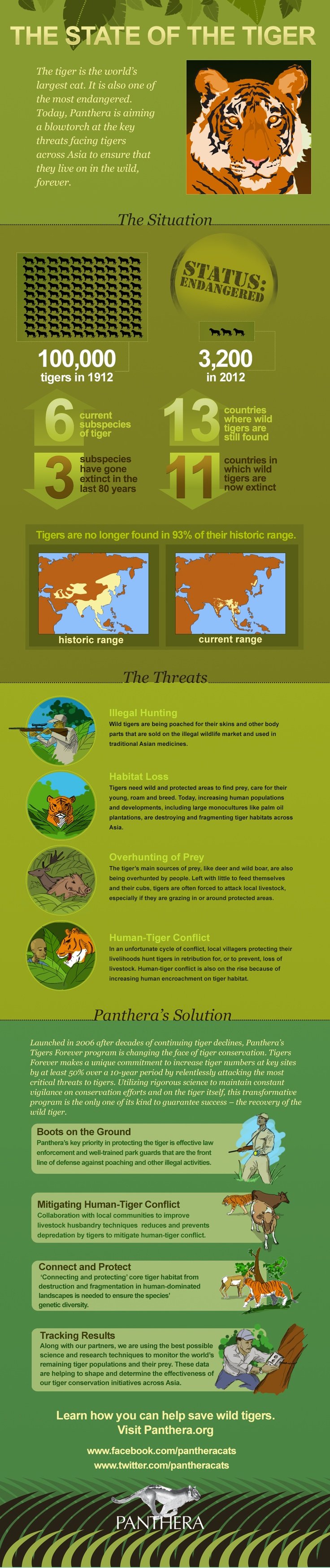 Pathera's info graphic about the state of Tigers in the wild.