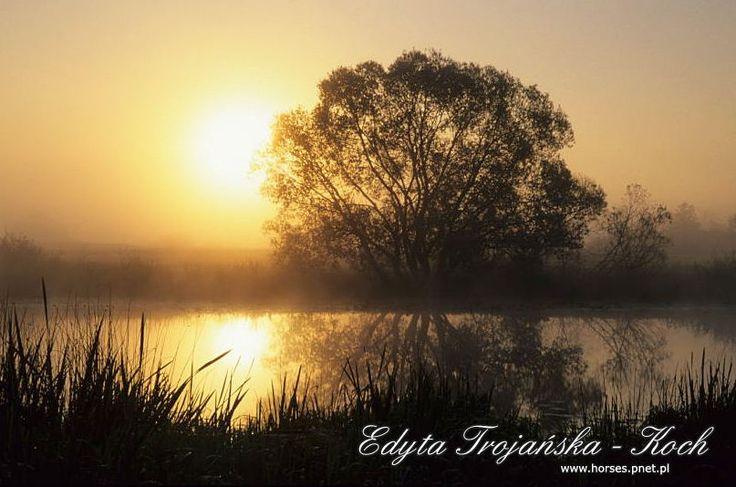 http://www.nadbuzanskiedwory.pl/wp-content/gallery/edyta-trojanska-koch/podlasie_11_8.jpg