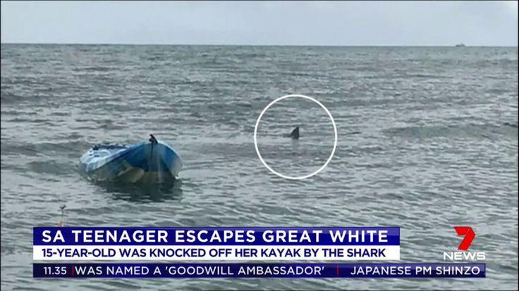 """Sarah Williams, de 15 años, nunca olvidará los momentos de terror que vivió este domingo, 22 de octubre, cuando pasaba un agradable día pescando calamares con su padre y su hermano cerca de Normanville, en Adelaida, al sur de Australia. Seguramente recordará el momento exacto en que un tiburón blanco de 4,5 metros emergió de la nada y lanzó por los aires el kayak en el que remaba y volvió a caer al mar, ya junto al escualo. """"El grito escalofriante de Sarah es algo que nunca podré describ..."""