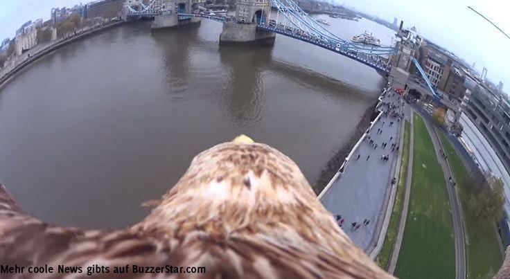Adler fliegt mit einer GoPro Kamera über den Fluss Themse direkt über die London Tower Brücke - geniale Bilder!  Interessante Neuigkeiten aus der Welt auf BuzzerStar.com : BuzzerStar News - http://www.buzzerstar.com/adler-fliegt-mit-einer-gopro-kamera-ueber-den-fluss-themse-direkt-ueber-die-london-tower-bruecke-geniale-bilder-f223c2952.html