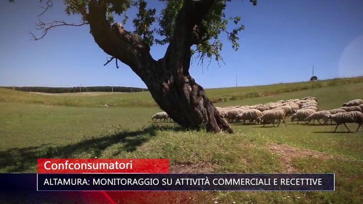 CONFCONSUMATORI ALTAMURA MONITORAGGIO SU ATTIVITÀ COMMERCIALI E RECETTIV...