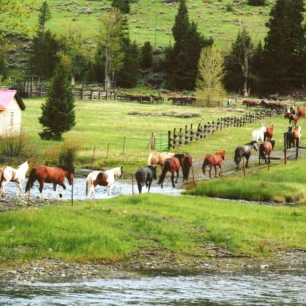 horse @ Sweet Grass Ranch, Montana, USA