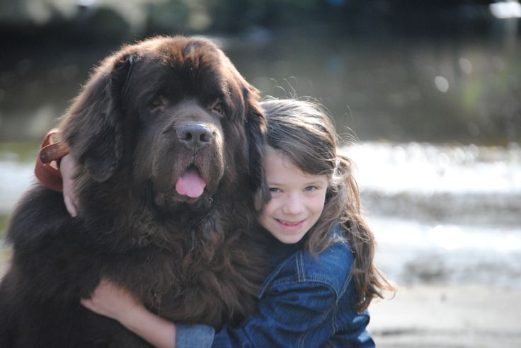 Today Is National Slobber Appreciation Day - mybrownnewfies.com