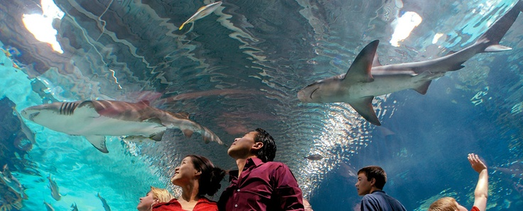 Adventure Aquarium, Camden, NJ ~ Spend the day here on the Delaware River waterfront & enjoy about 8,000 animals living in varied forms of semi-aquatic, freshwater, and marine habitats. ~ Find Top Pay #RNJobs in NJ: http://www.americantraveler.com/new-jersey-nursing-jobs/