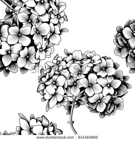 Image Result For Hydrangea Outline Realistic Flower Drawing Flower Drawing Flower Collage