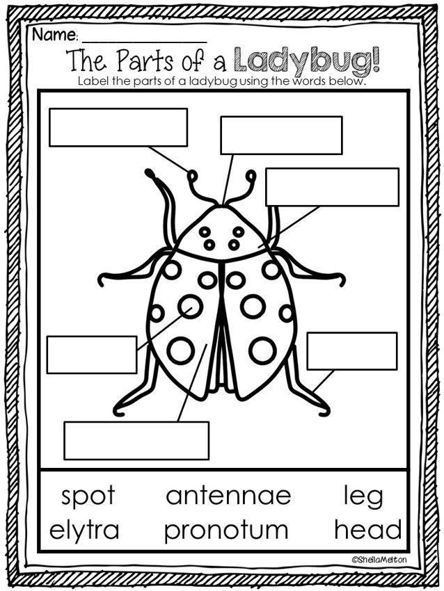 125 Best Ladybug Unit Images On Pinterest