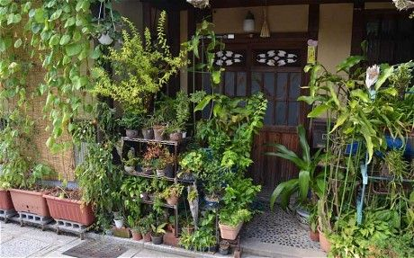 7 best pot plants in japan images on pinterest pot for Typical japanese garden plants