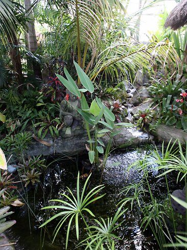 Garden Ideas Brisbane 218 best bromeliads and tropicals images on pinterest | plants