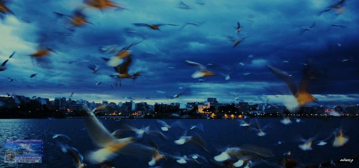 Flying birds above ths city!! Chalkida - Greece  Photo from: https://www.facebook.com/oi.halkideoi.se.mia.selida