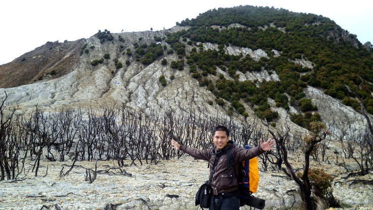Dead trees, Papandayan Volcano, West Java, Indonesia