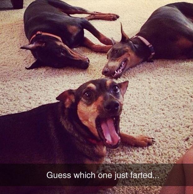 Beware Of Funny Animals - 28 Pics