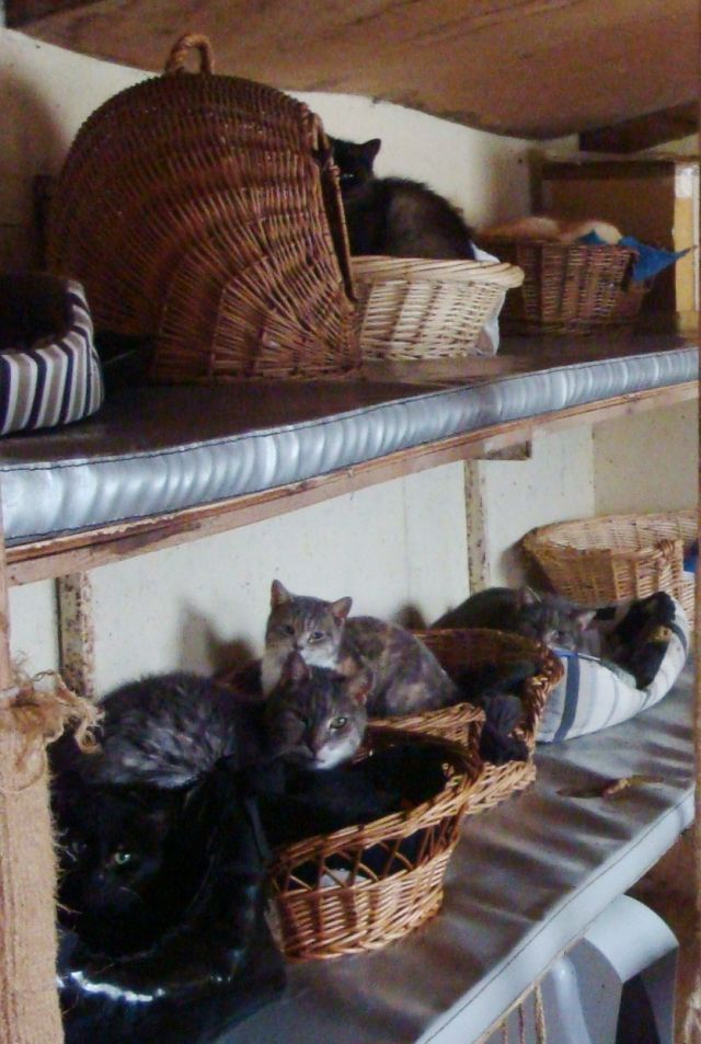 Un mobile-home pour chats ! - Ulule