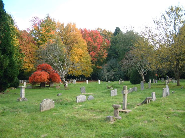 The Canadian maples next to the First World War graves wearing autumn colours.