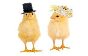 Texte+haioase+pentru+invitatii+de+nunta