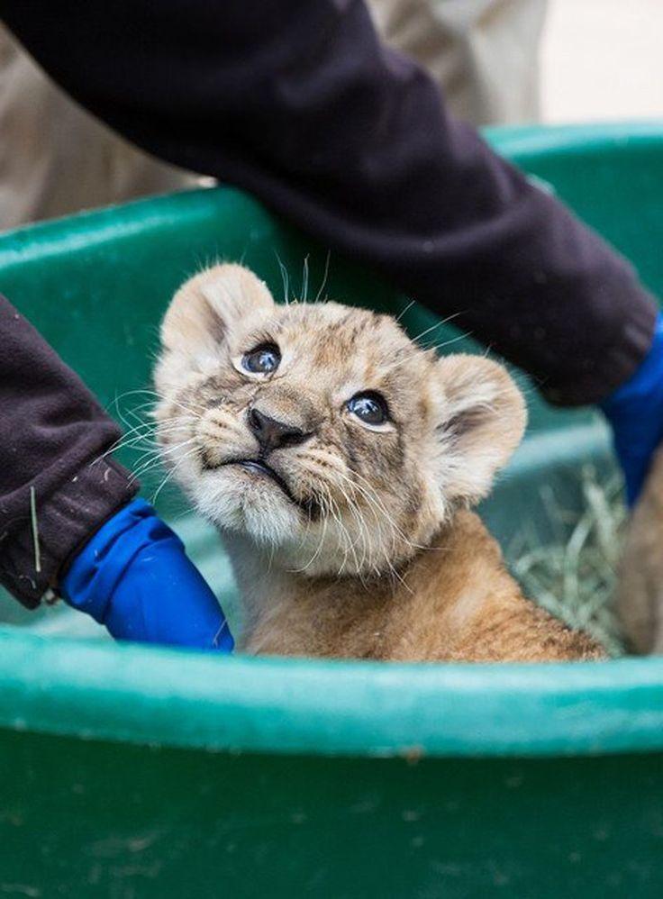Τα πιο χαριτωμένα ζώα του κόσμου «ανταγωνίζονται» στο twitter | Protagon.gr