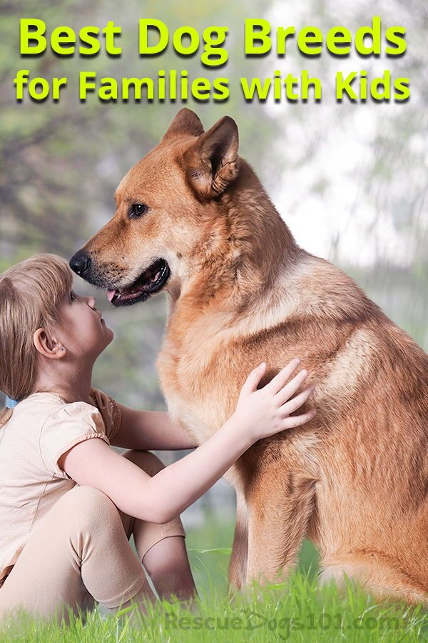 Best Dogs For Kids You Want To Adopt A Dog But Will The Dog Be Good With Your Kids How Do I Know That The Best Dogs For Kids Dog