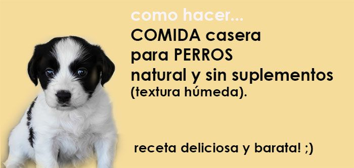 comida casera para perros recetas. Como hacer comida casera para perros natural, facil. Comida humeda perros