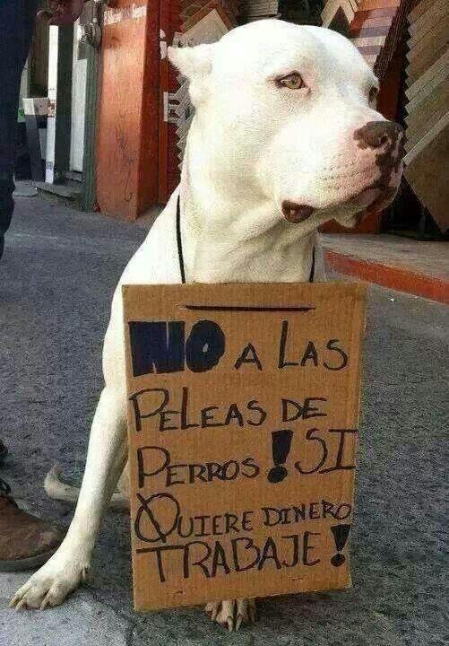 No a las peleas de perros