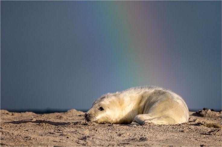 Am Ende des Regenbogens liegt ein Goldschatz.. von Manfred Bartels
